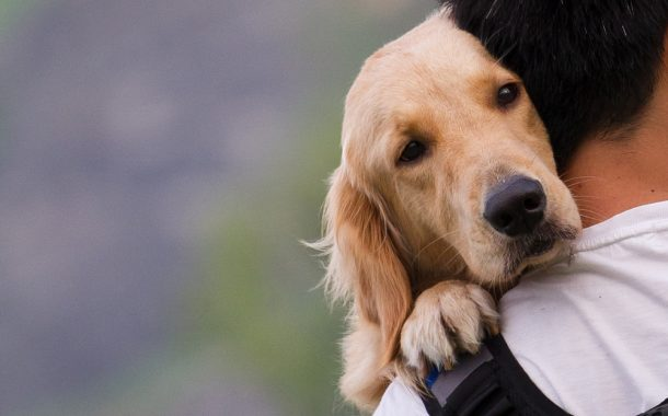 Dog owners urged to check vaccinations