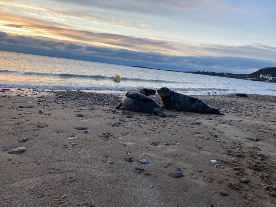 New Year seal release Gower Jan21 pic3